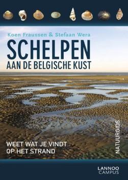 schelpen aan de belgische kust